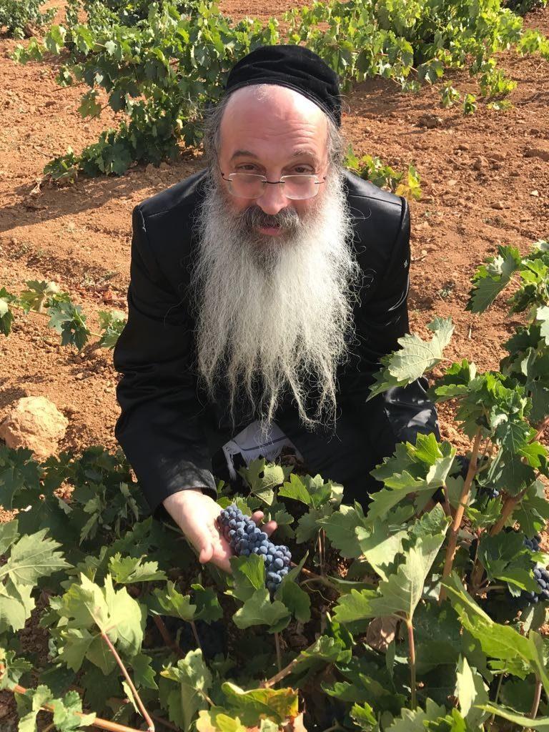 Inspection d'une récolte en Espagne